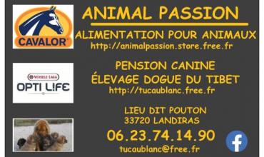 Animal Passion